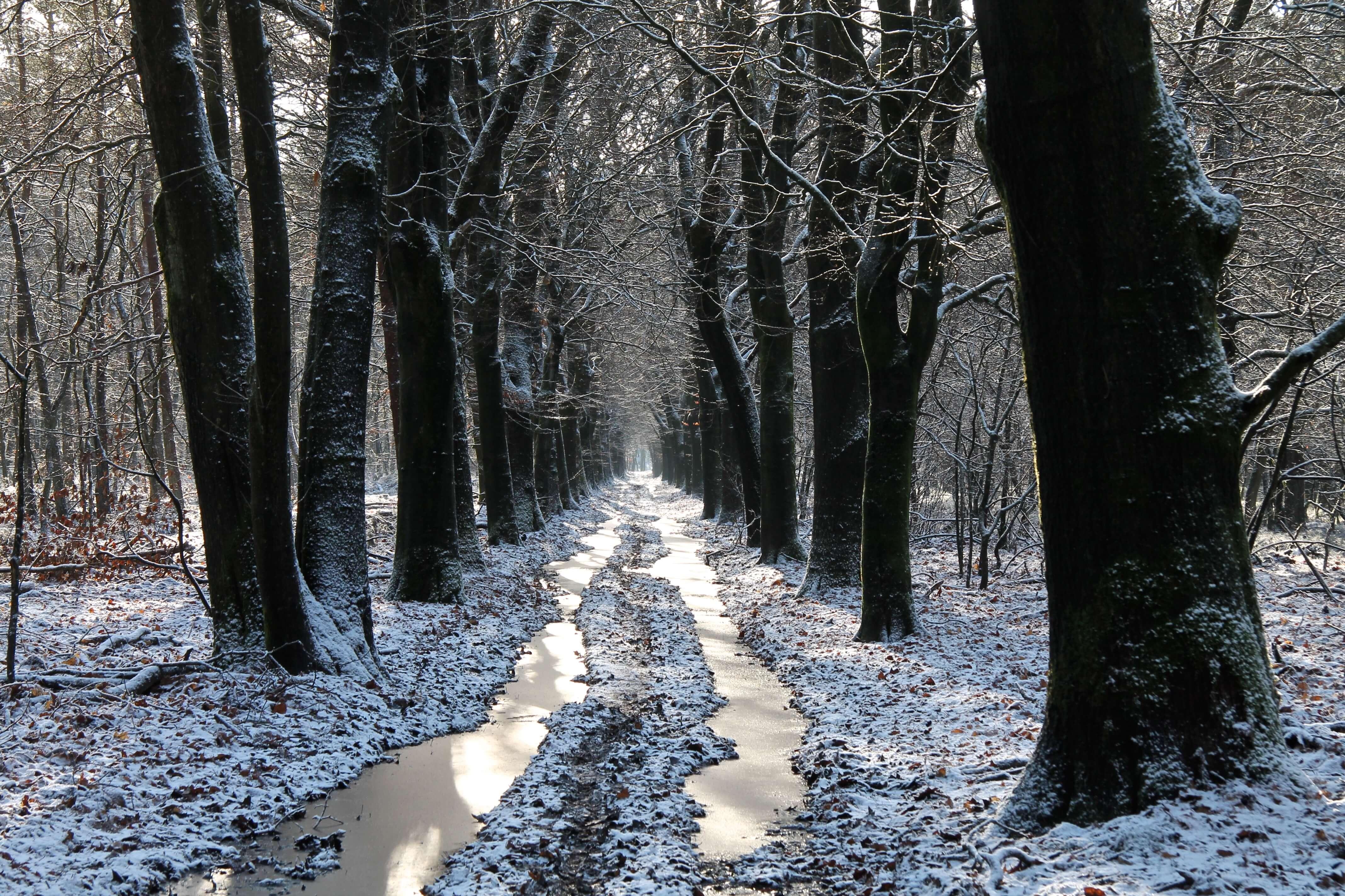 sneeuw en ijs in het bos